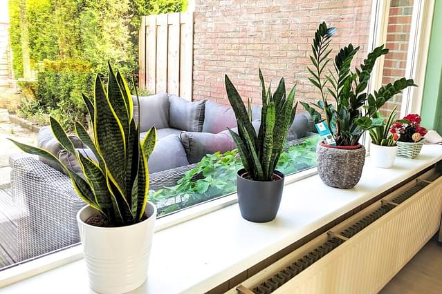 The five easiest houseplants for beginners