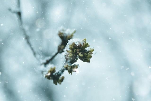 Plant bedekt door sneeuw
