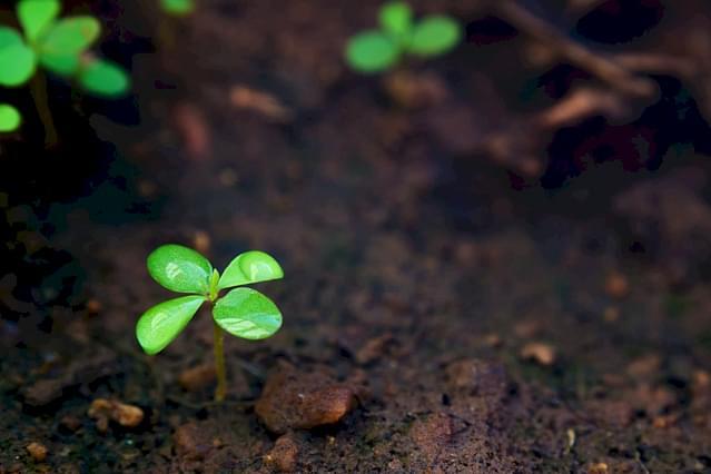 Soil outdoors