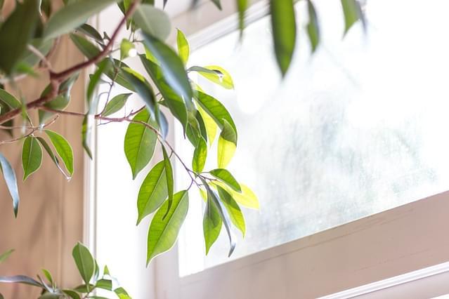 Is de richting van het zonlicht van belang voor je kamerplant?
