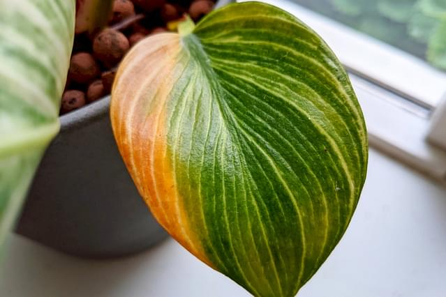 Pruning your houseplants: Why you shouldn't be afraid to do it