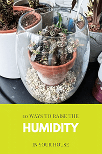 10 ways to raise the humidity in your house
