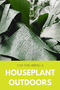 Can you bring a houseplant outdoors?