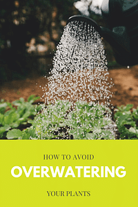 How to avoid overwatering your plants