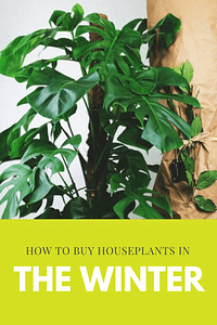 How to buy houseplants in the winter