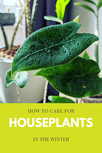 How to care for houseplants in the winter