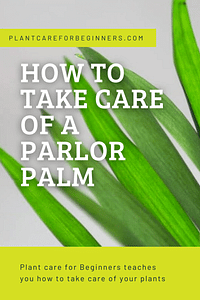 How to take care of a Parlor Palm
