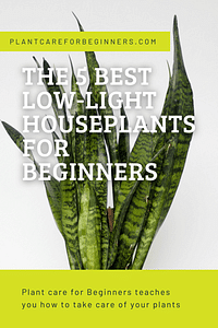 The 5 best low-light houseplants for beginners