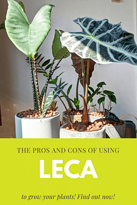 The pros and cons of using Leca to grow your plants