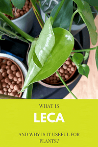 What is Leca and why is it useful for plants?