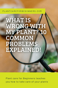 What is wrong with my plant? 10 common problems explained!