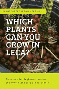 Which plants can you grow in Leca?